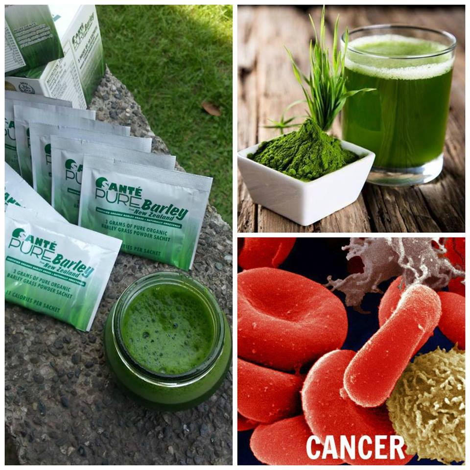 Sante Barley Grass Is Good For Cancer