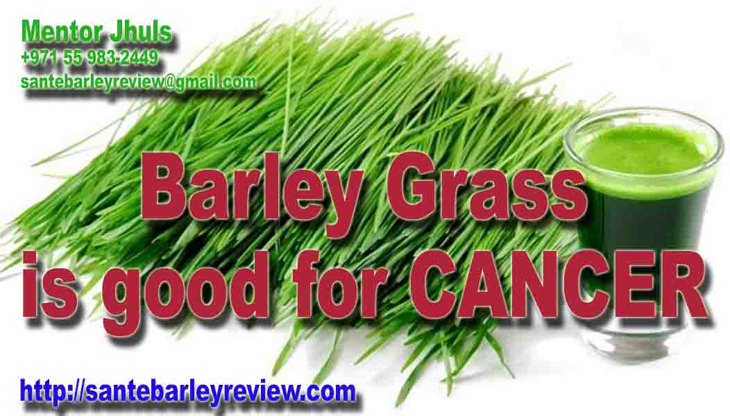 barley grass is good for cancer
