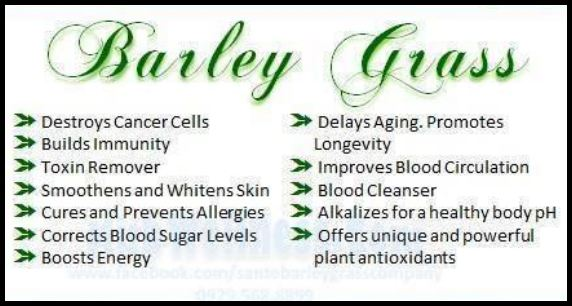 Barley Grass reactions to patients