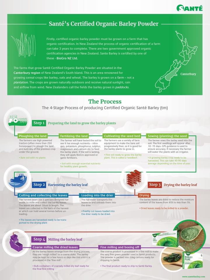 4-Stage Process in producing Sante's Certified Organic Barley Powder